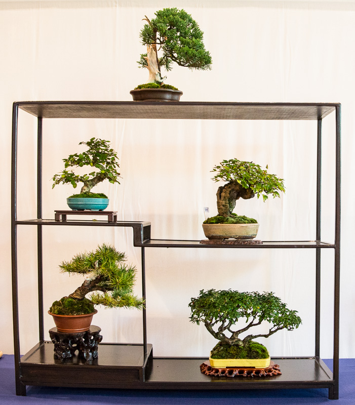 Shohin-Bonsai Display #4