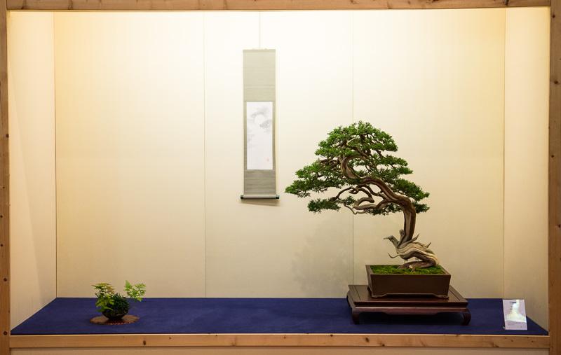 Tokoname mit Juniperus sabina