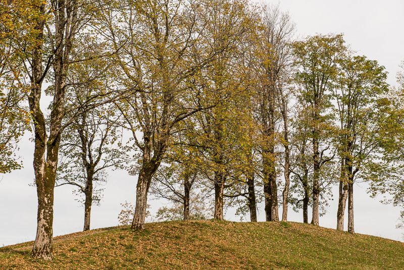 Aussichtspunkt Hofmannsruh bei Oberstdorf