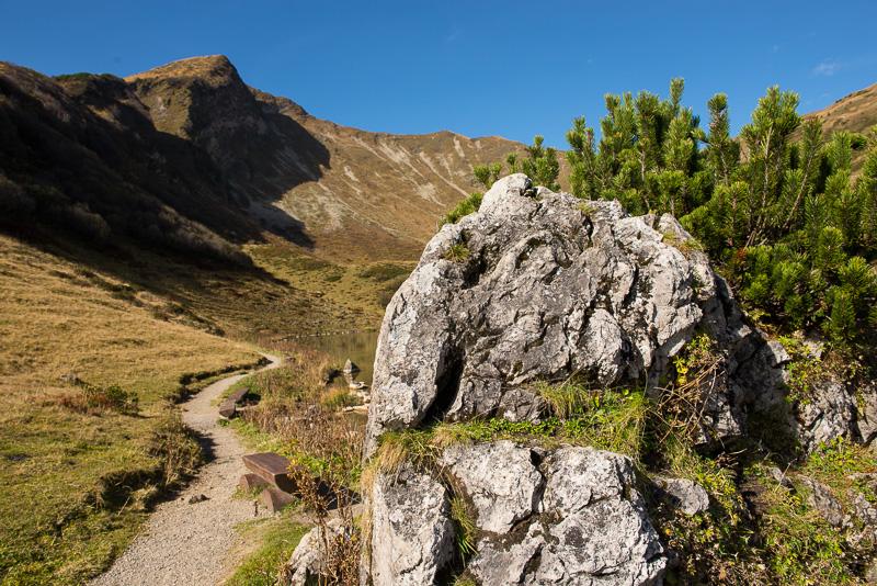 Fellhorn mit Bergkiefern