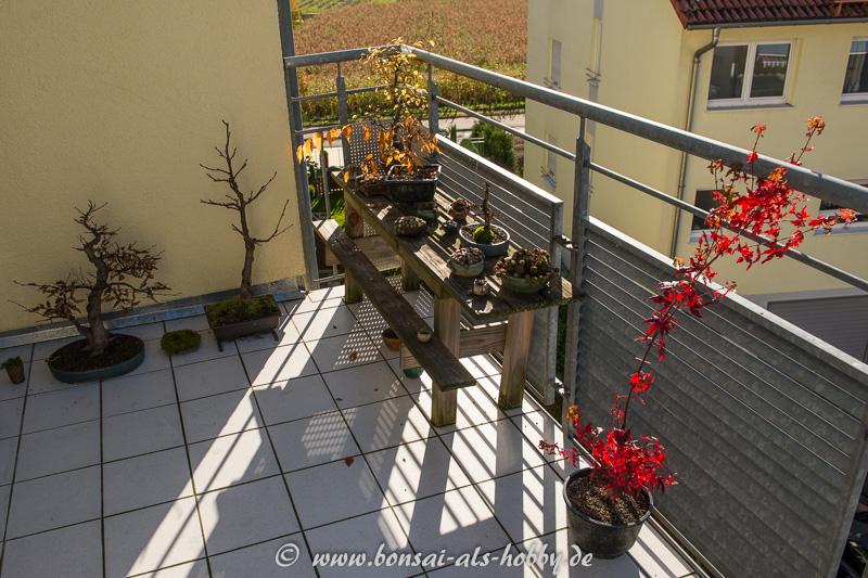 Balkon mit Bonsai-Bäumen