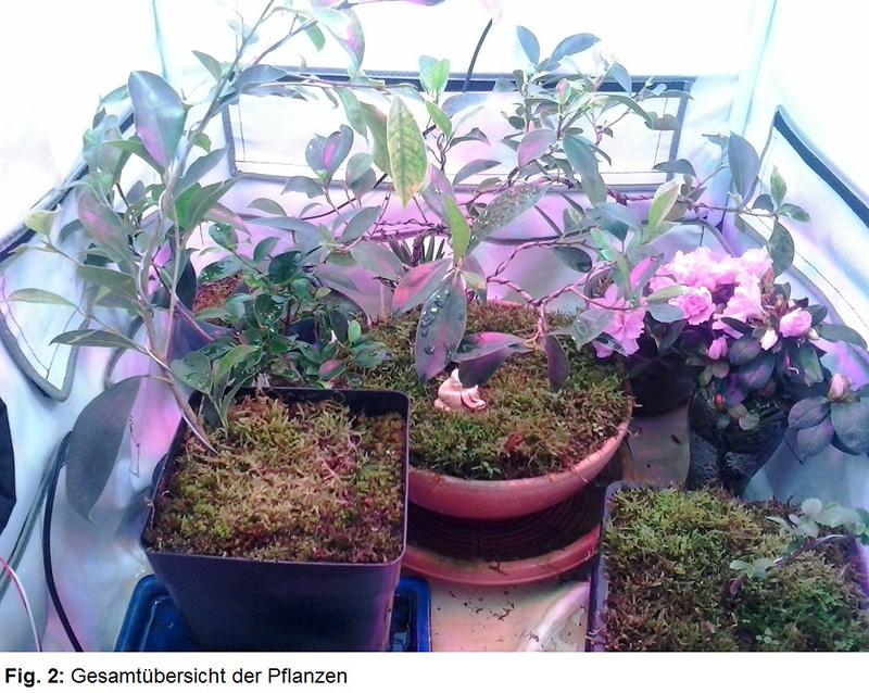 Pflanzenzelt Fig. 2