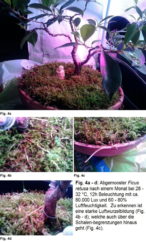 Pflanzenzelt Fig. 4a bis 4d