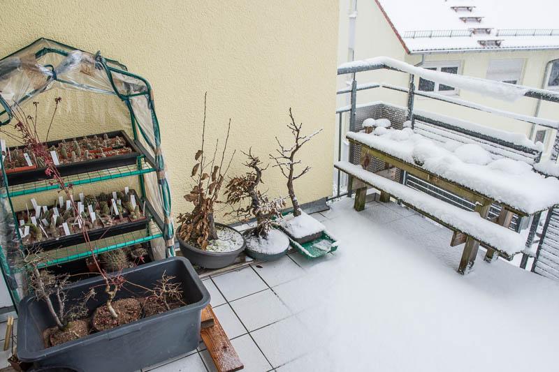 Bonsai auf dem Balkon am 27.12.2014