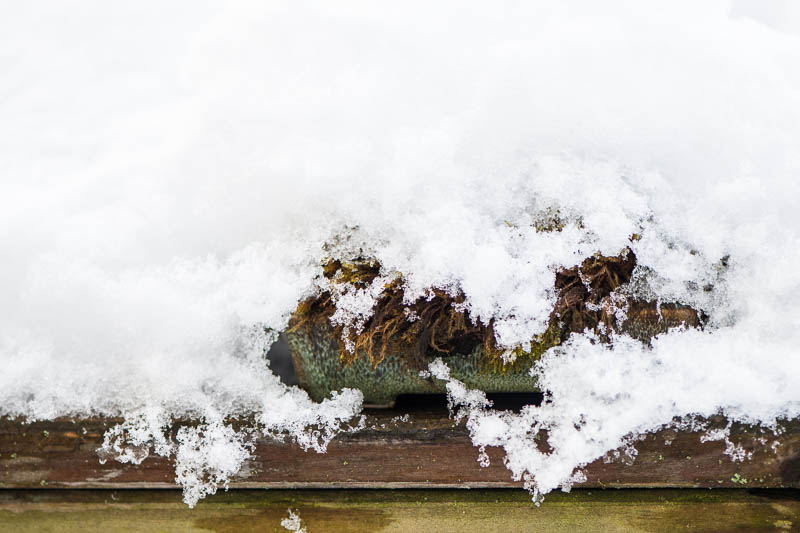 Moos Kusamono unter Schnee