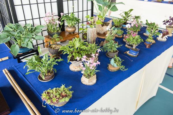 Akzentpflanzen