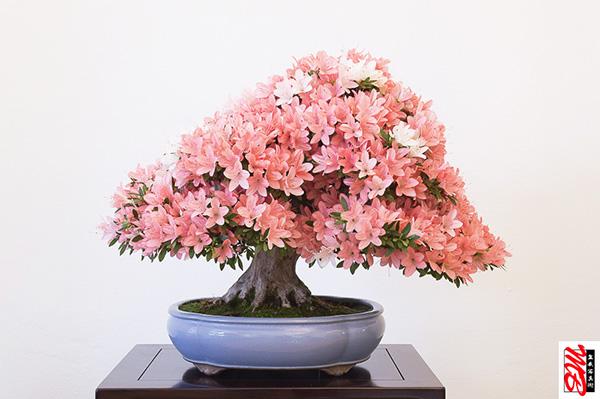 Mehr Blütenpracht geht nicht?