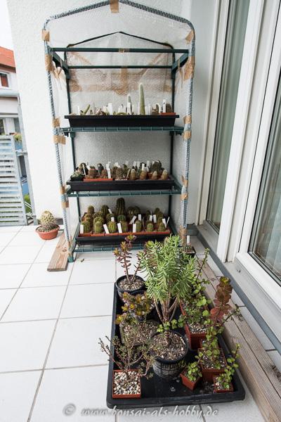 Balkonecke mit Kakteen und anderen Sukkulenten