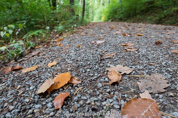 Waldweg mit Laub