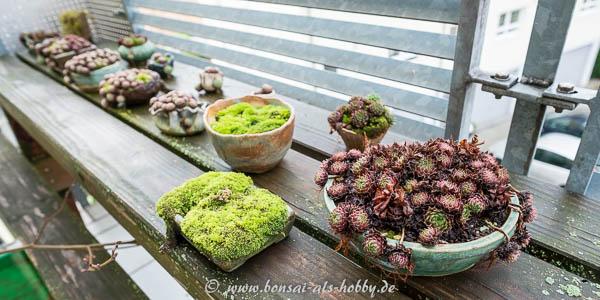 Akzentpflanzen im November