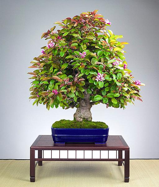 Malus - Apfelbaum von Marcel Drechsler