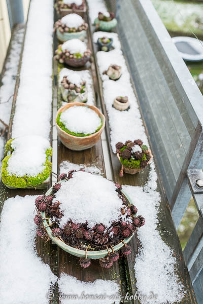 Kusamono im ersten Schnee
