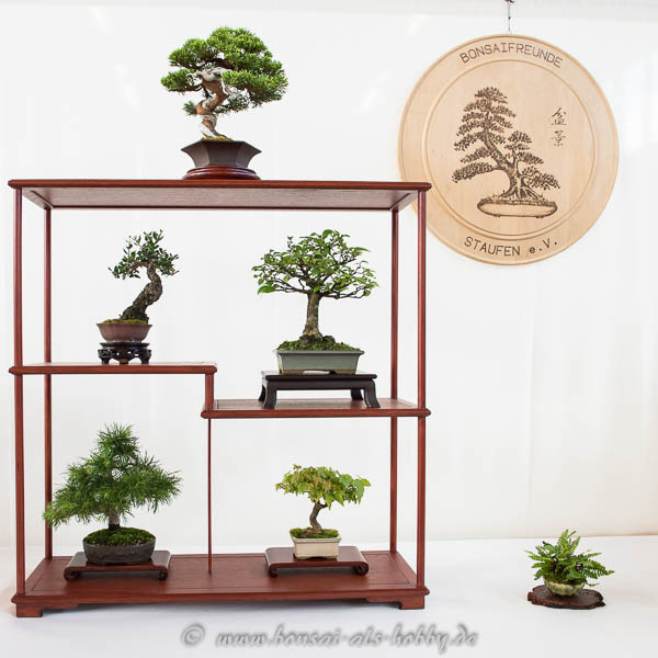 Shohin-Bonsai Display