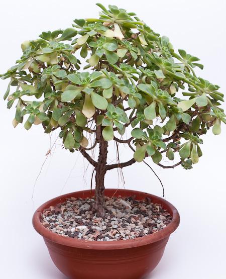 mein bonsaihimmel