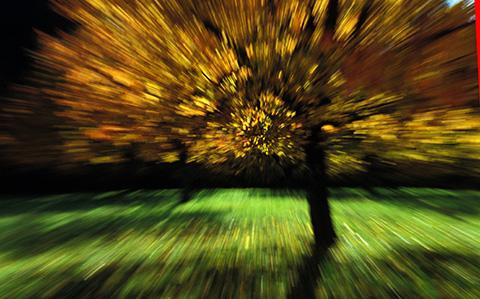Baum im Oktober