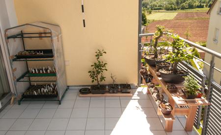 Balkon mit Bonsai und Kakteen
