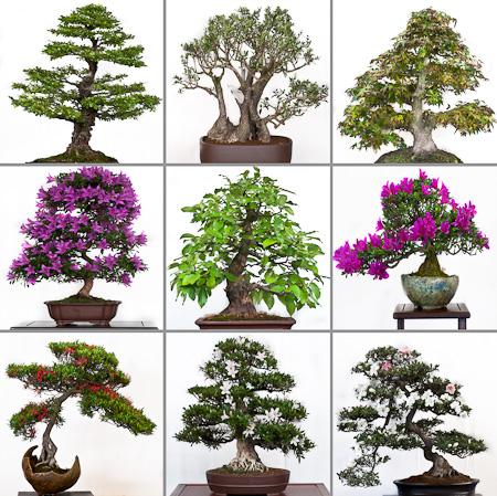 Bonsaiausstellung
