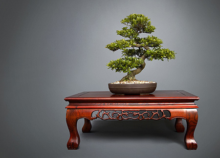 Rhododendron indicum Chinzan