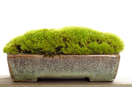 Top Wie lange dauert es bis sich ein Moospolster als Akzentpflanze bildet? &LU_84