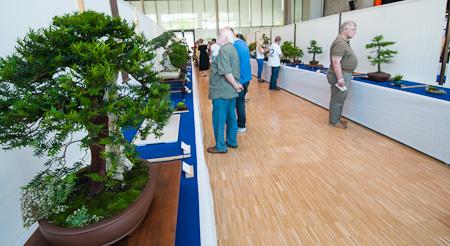 Bonsai auf der Ausstellung