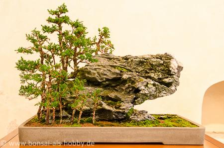 Juniperus Wald auf einem Stein