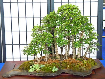 Bonsai als Waldgestaltung