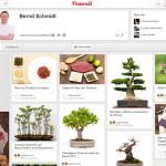 Bonsai auf Pinterest