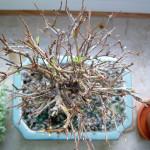 Granatapfel von Sandra #3