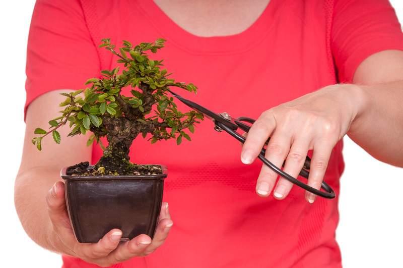 Bonsai schneiden