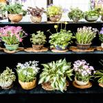 Kusamono - Beistellpflanzen