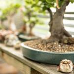 Bonsairegal mit Akzentpflanzen und Bonsai