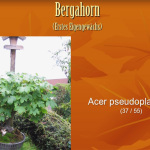 Video Bonsai-Jahr 2014 von HJB