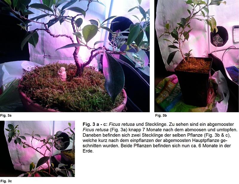 Pflanzenzelt Fig. 3a bis 3c