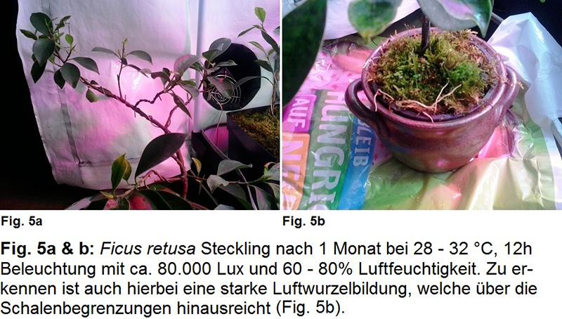Pflanzenzelt Fig. 5a bis 5b