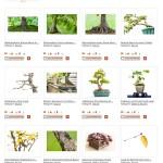 Gratis Foto-Lizenzen über Bonsai auf Pixelio
