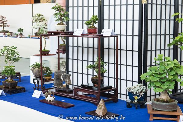 Shohin-Bonsai und Akzentpflanzen