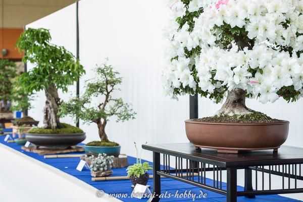 Bonsaiausstellung des AK Aichtal-Filder