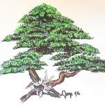 Pinus mugo Zeichnung von Andrea Junger